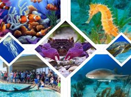 S.E.A. Aquarium in Sentosa Island