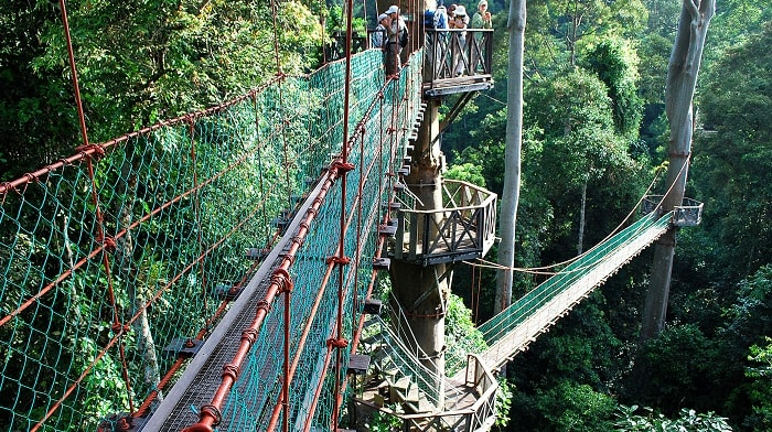 Jungle Trekking In Danum Valley