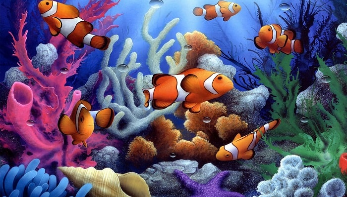 Clown Fish and Corals