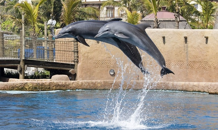 Seal and Dolphin Show