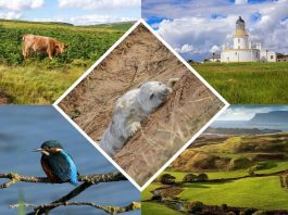 Best UK Parks to Capture Photos of Nature