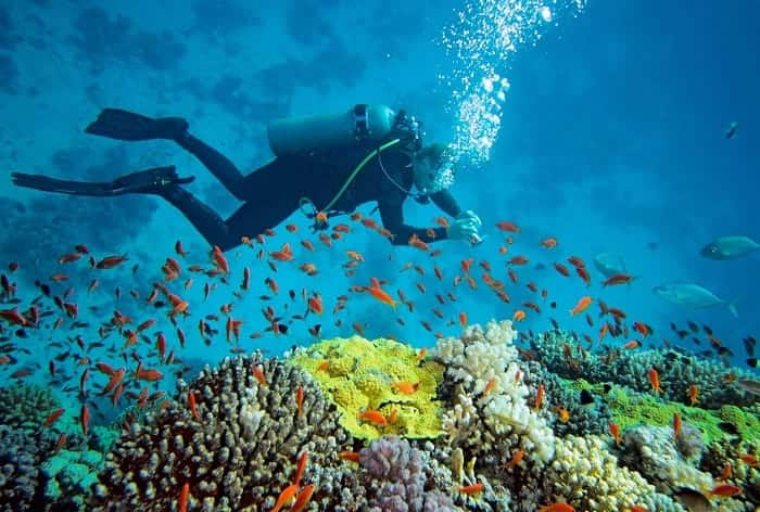 Scuba Diving in Andaman and Nicobar Islands