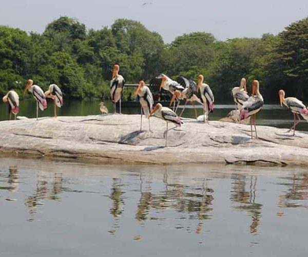 Bharatpur Bird Sanctuary, Rajasthan