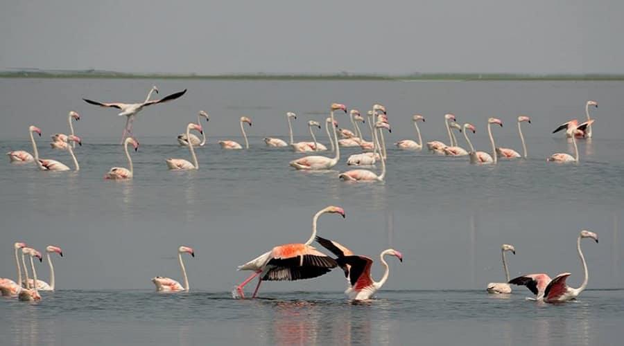 Chilka Lake Bird Sanctuary, Odisha