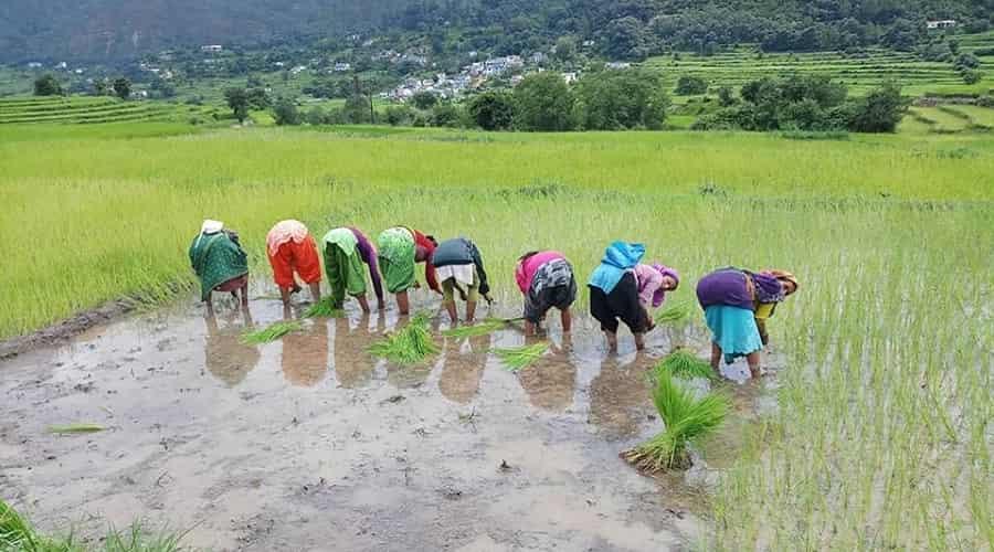 Kausani in Monsoon