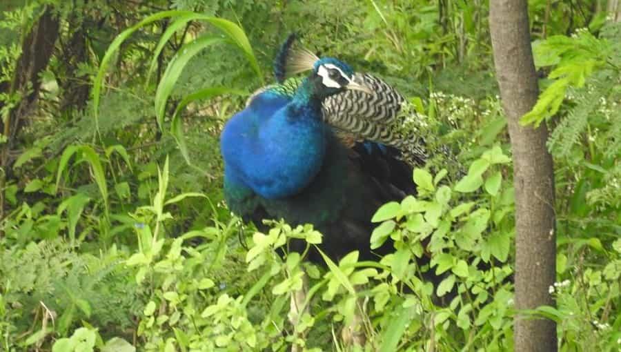 Mayani Bird Sanctuary, Maharashtra