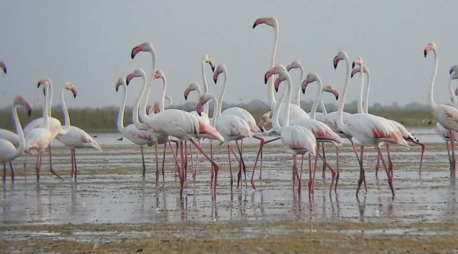 Nal Sarovar Bird Sanctuary, Gujarat