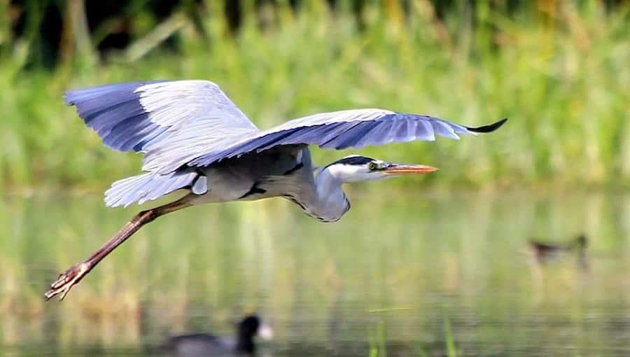 Sultanpur Bird Sanctuary, Haryana