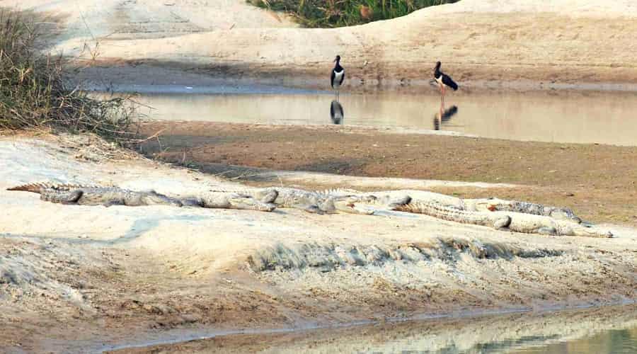 Bird Watching, Dudhwa National Park