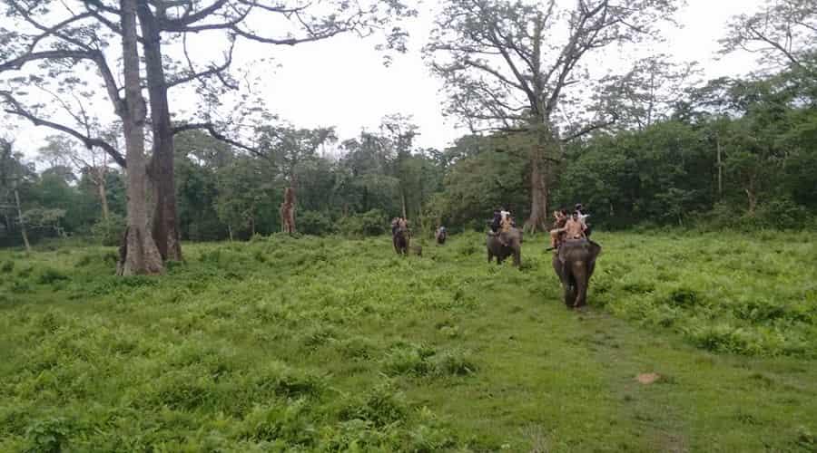 Jaldapara National Park, Dooars
