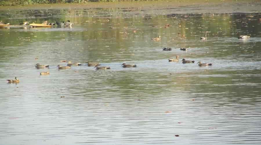 Nawabganj Bird Sanctuary, Unnao