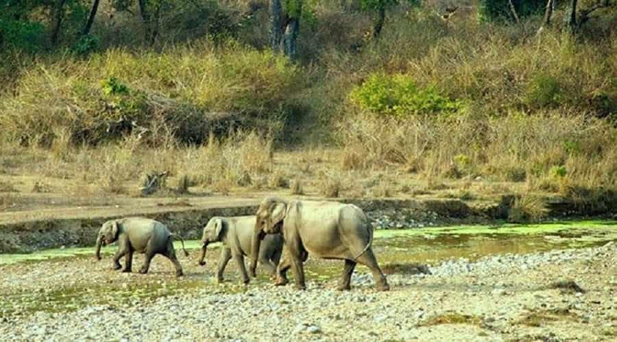 Govind Wildlife Sanctuary