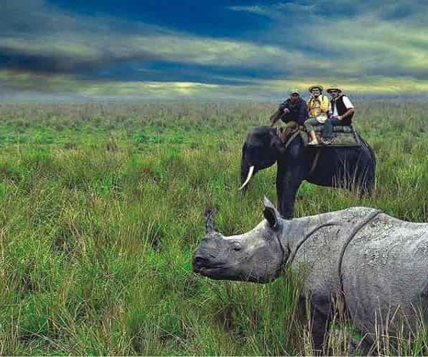 Kaziranga National Park, Rhinoceros