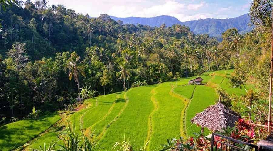 The Natural Beauty of Bali