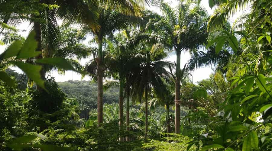 Turner's Hall Woods Barbados