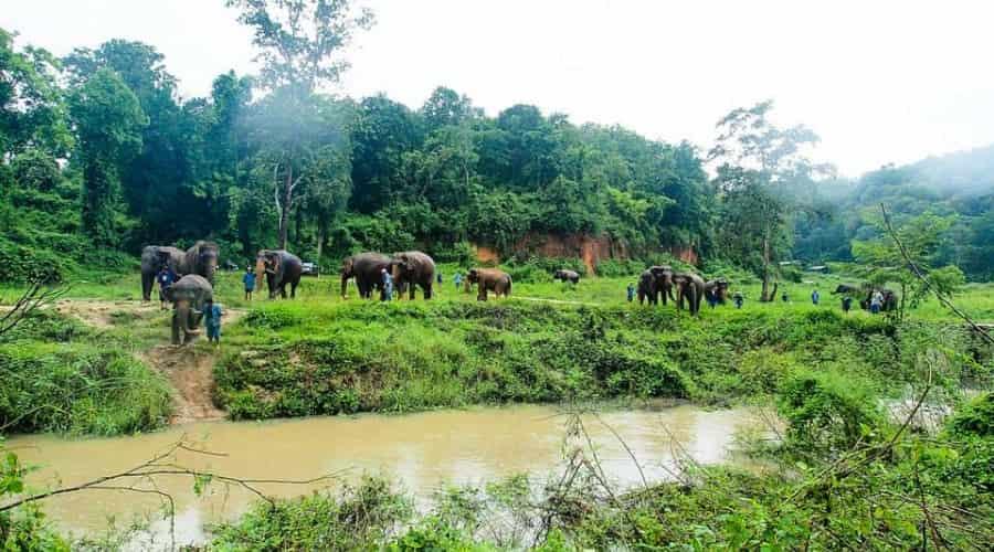 Thailand Elephant Conservation Center