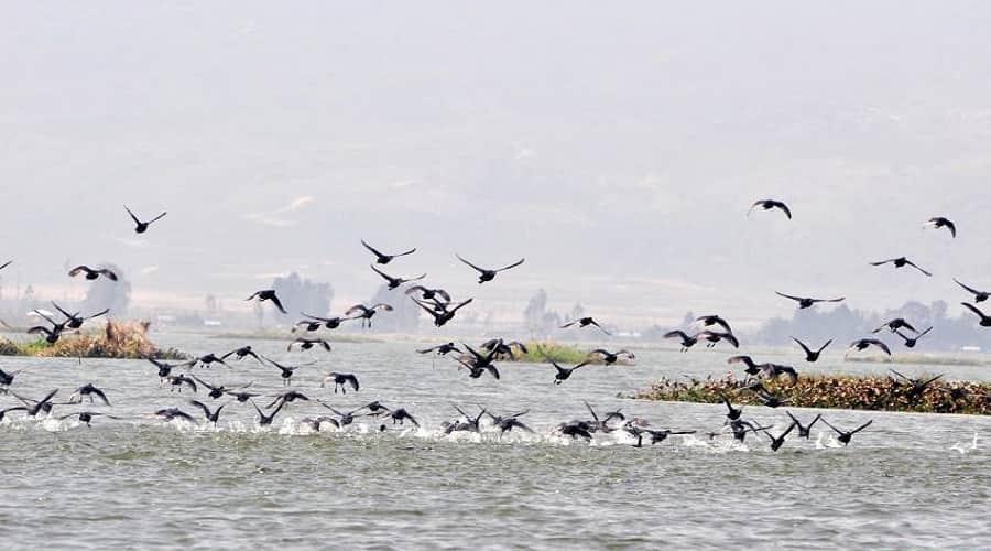 Bird Watching at Loktak Lake