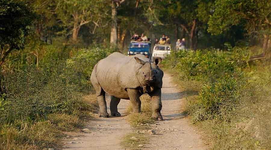 Jeep Safari Kaziranga National Park