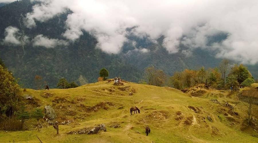 Kanchenjunga national park west sikkim