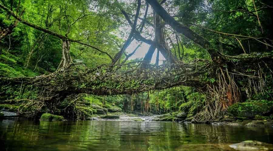 Root Bridge Mawlynnong Village