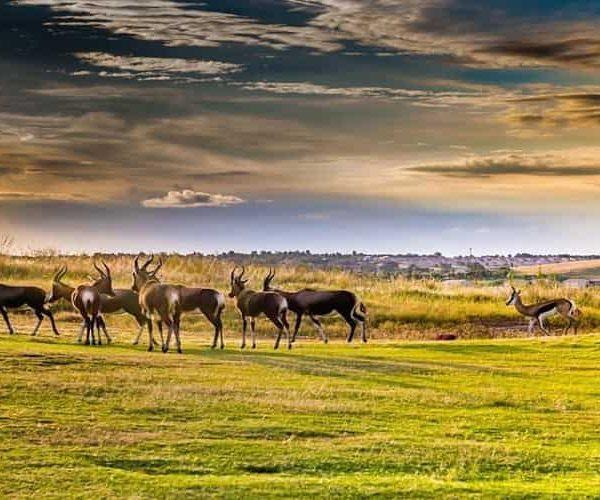Big Five safaris in South Africa