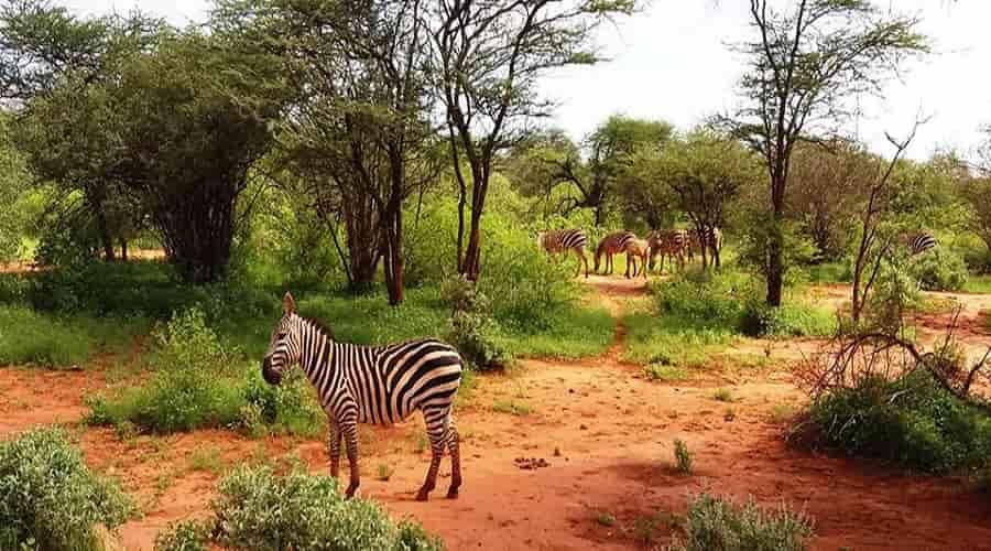 Kenya's Tsavo National Park